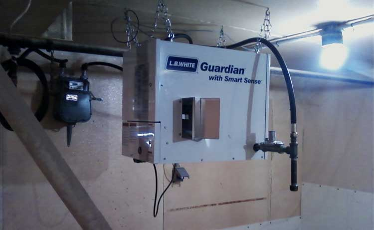 Guardian Forced Air Heater with Smart Sense Technology in a swine building.