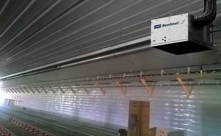Sentinel v.2 Tube heater in a poultry house.