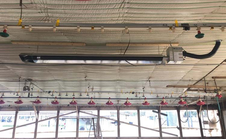 The Oval-U 100 radiant tube heater hanging in a poultry facility.